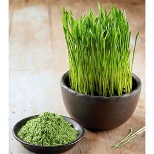 organic wheatgrass powder ต้นอ่อนข้าวสาลี วิธีกิน