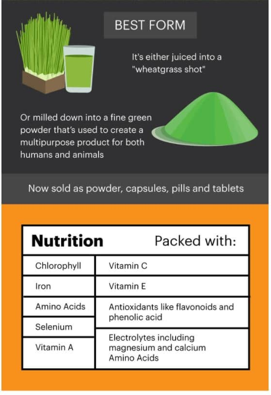 wheatgrass benefits snapshot dr.Axe