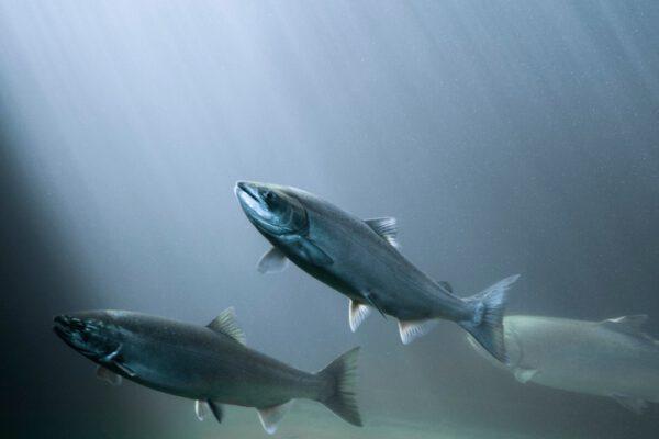 คอลลาเจน ยี่ห้อไหนดี วิธีเลือกซื้อ ประโยชน์ quality collagen-powder-healthplatz อาซาอิ คอลล่า fish collagen